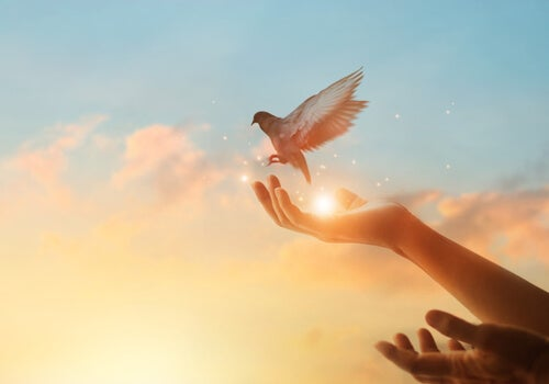 Manos con una paloma para representar cuando acepto lo que no puedo cambiar