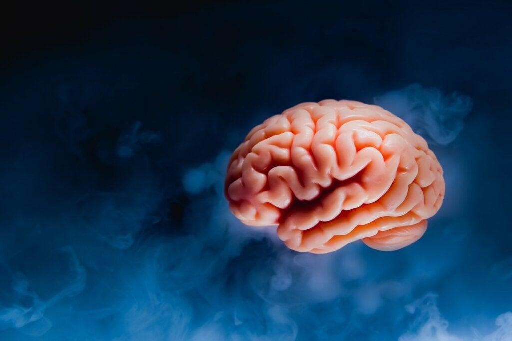 cerebro fondo azul oscuro representando la felicidad y su relación con el tamaño del cerebro