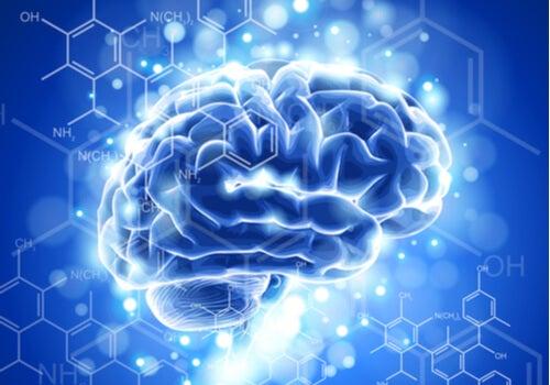 Neuroética: características y desarrollo