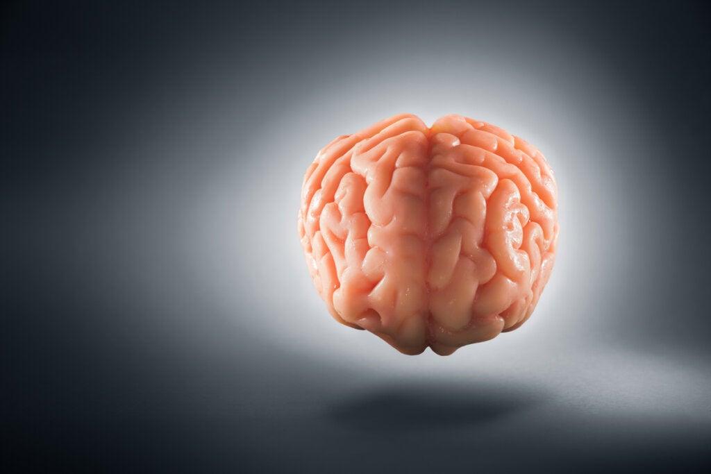 Visión frontal del cerebro